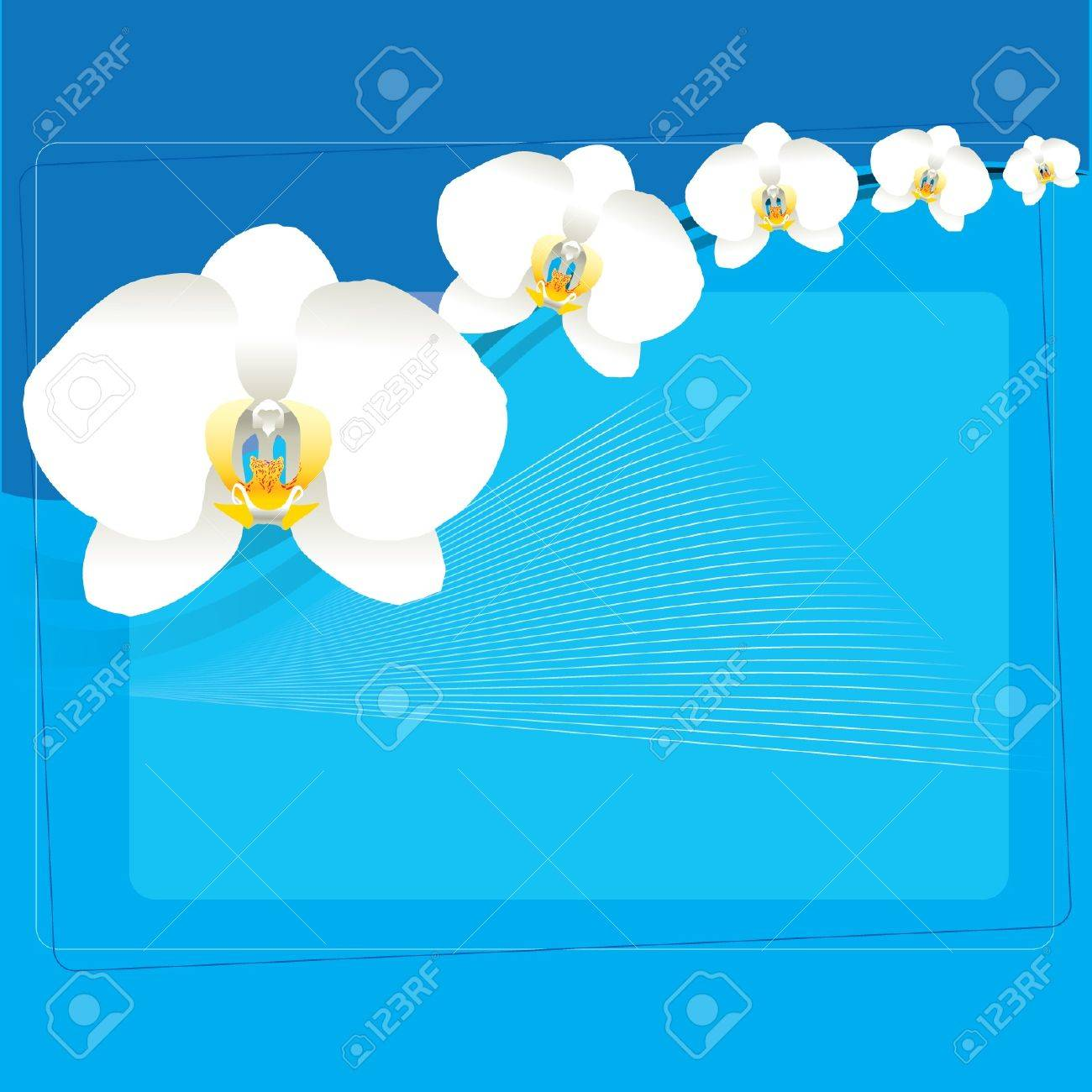 White Orchid Background Stock Vector - 13568430