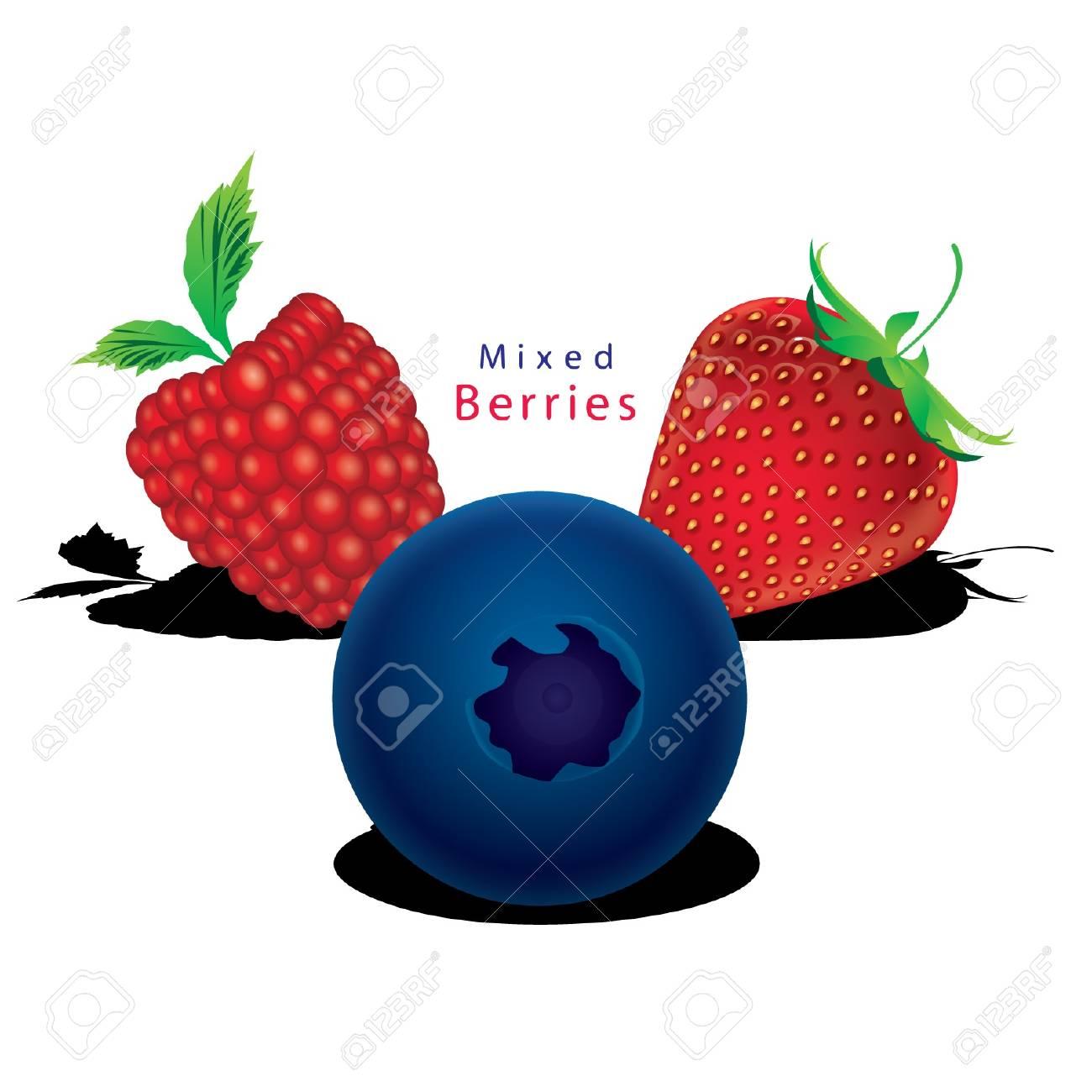 Mixed berries Raspberry, blueberry, strawberry vector Stock Vector - 15558096