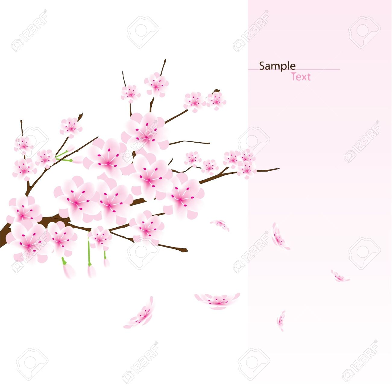 vector cherry blossom branch royalty free cliparts vectors and