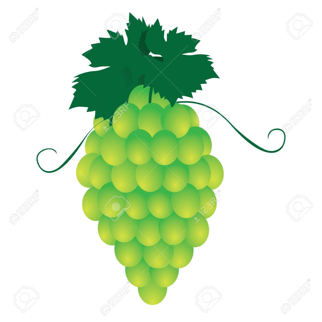 Bunches of grapes. Stock Vector - 17800948