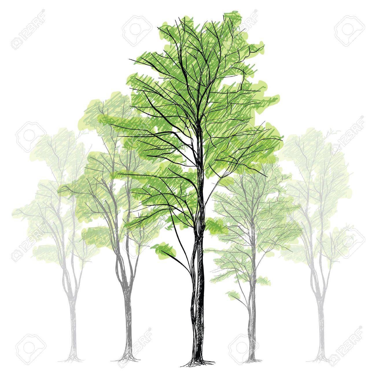 Tree - Hand Drawn Stock Vector - 17995746