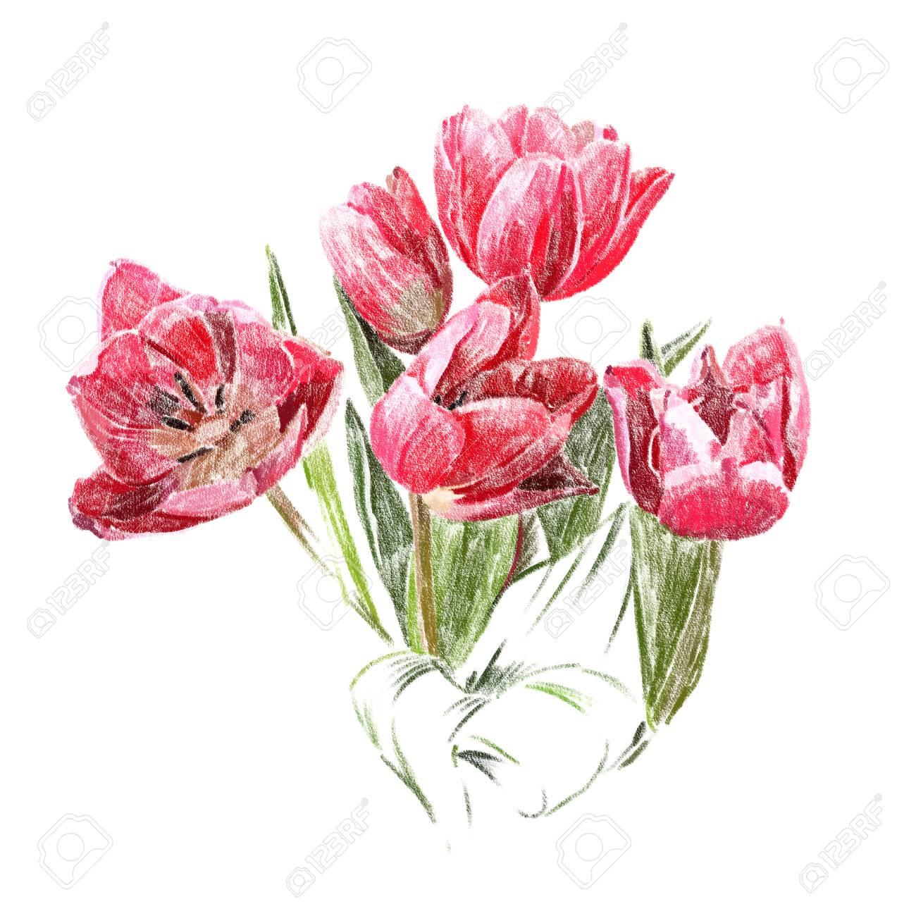 Ongekend Bloemen Geïsoleerd Op Een Witte Achtergrond. De Rode Tulpen. Hand JV-85