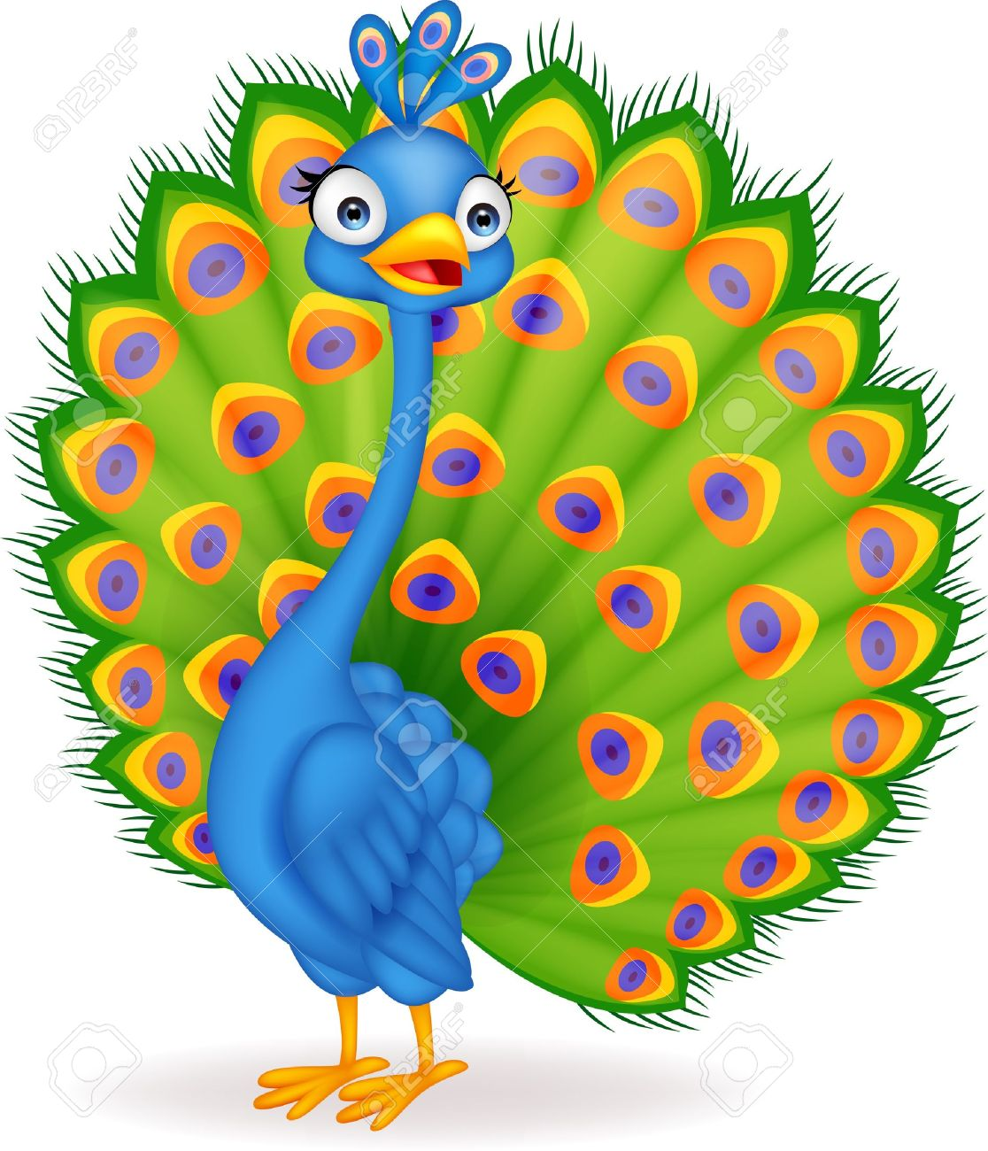10 354 peacock stock illustrations cliparts and royalty free