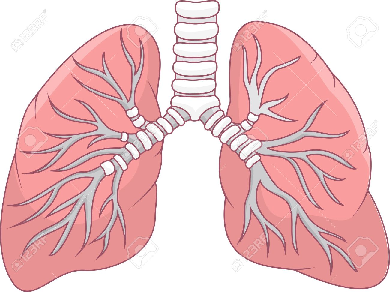 illustration of human lung royalty free cliparts, vectors, and, Cephalic Vein