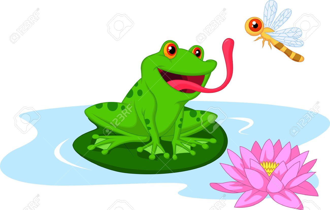 frog eating stock photos u0026 pictures royalty free frog eating