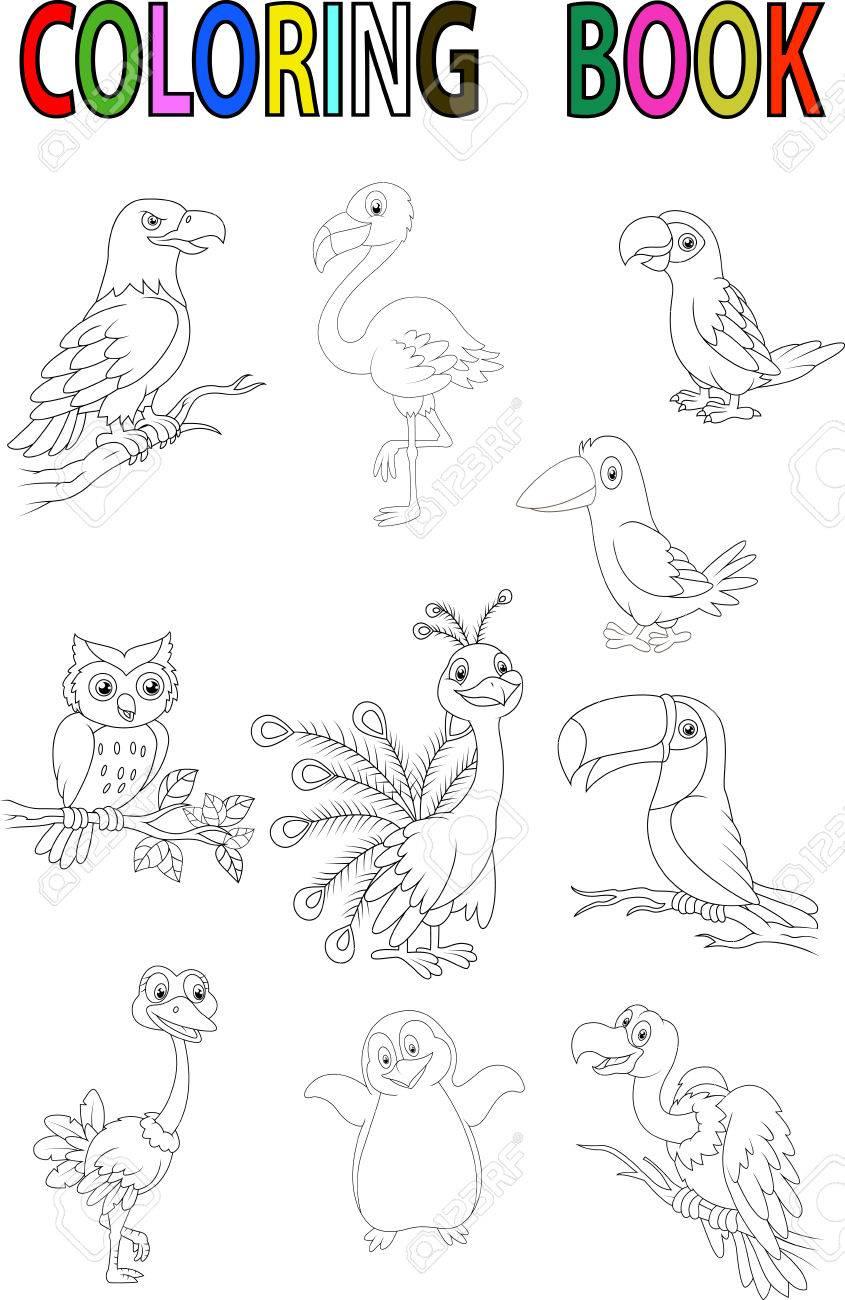 Libro Para Colorear Pájaro De La Historieta Ilustraciones ...