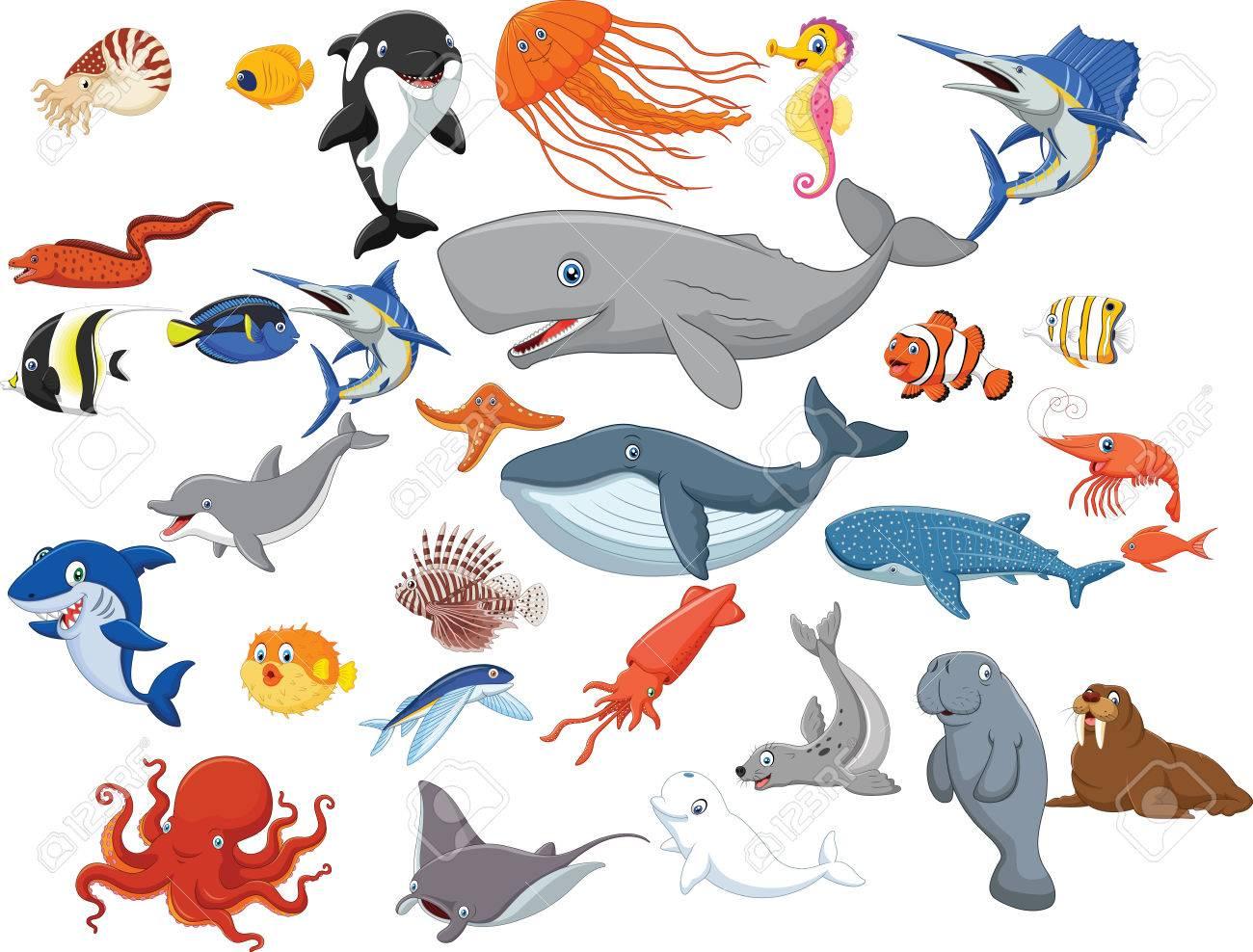 Vector illustration of Cartoon sea animals isolated on white background - 56170911