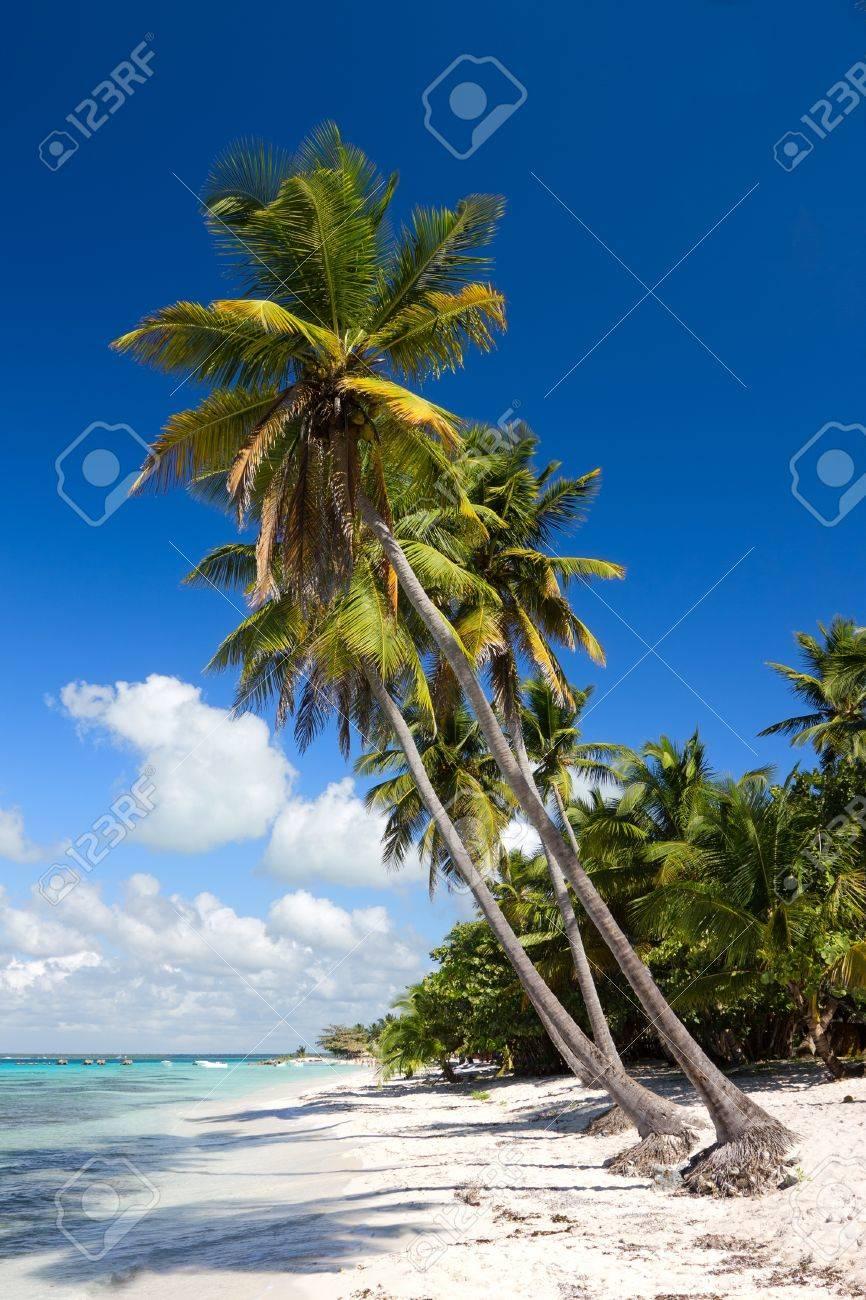 Palm trees on the tropical beach, Saona Island, Caribbean Sea, Dominican Republic Stock Photo - 12113859