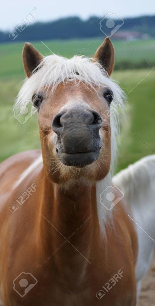 frau bläst pferd
