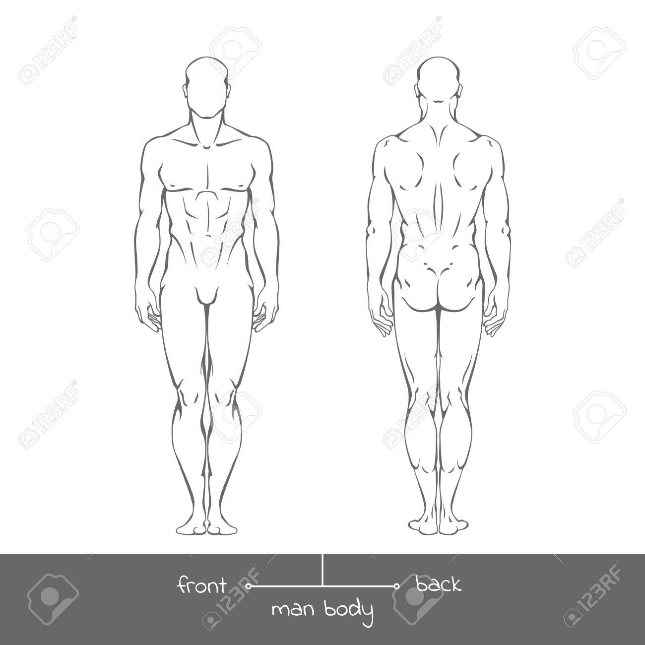Healthy young man from front and back view in outline style. Male muscular body shapes linear illustration with the inscription: front and back. - 56086578