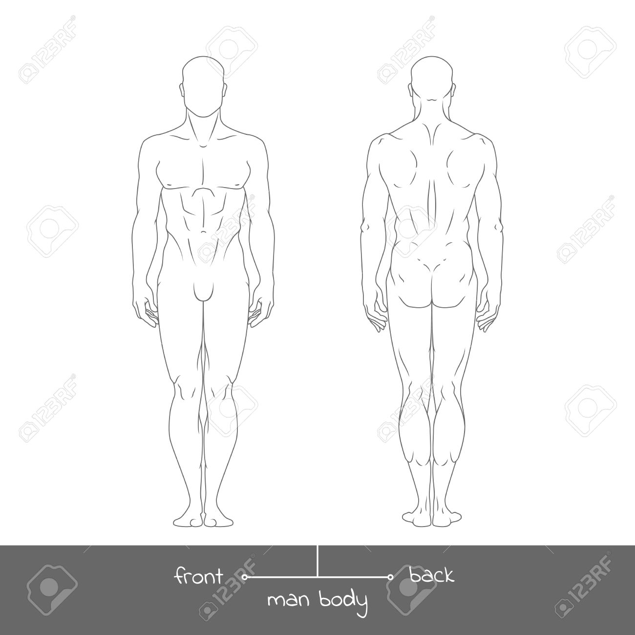 Joven Sano De La Vista Frontal Y Posterior. Musculoso Cuerpo ...