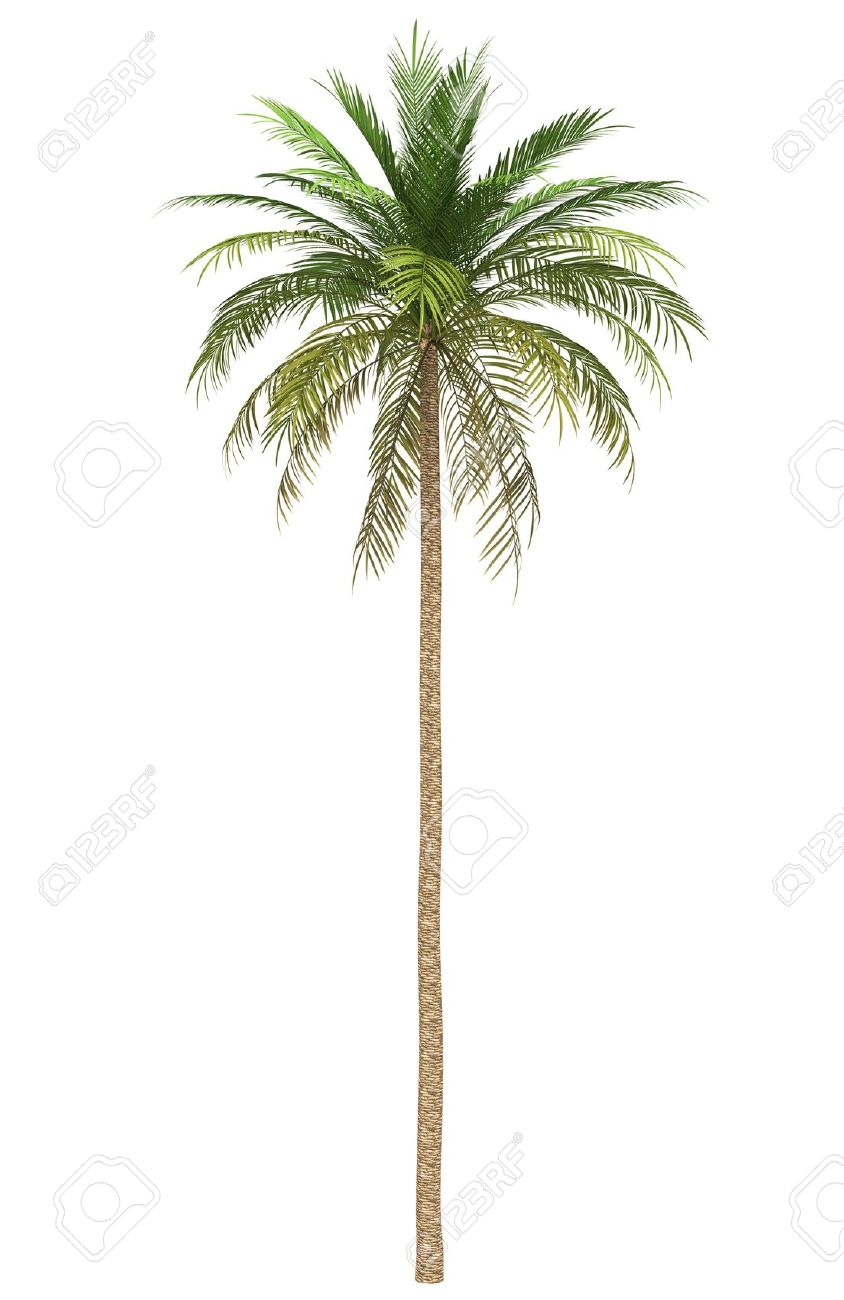 date palm stock photos u0026 pictures royalty free date palm images