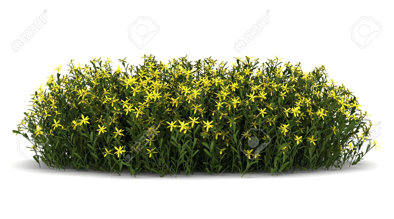 Flower Shrubs Png Flower Bush Png