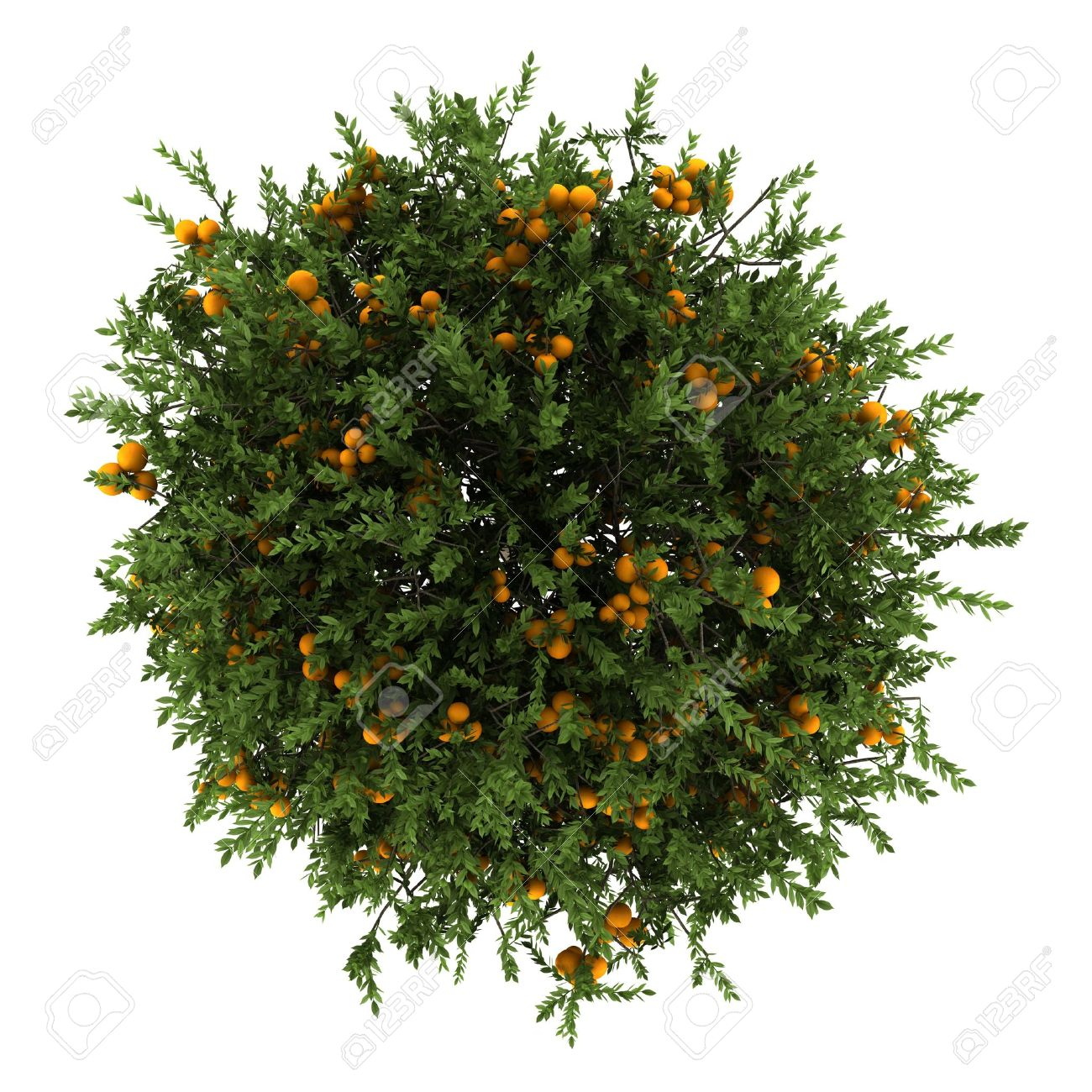 top view of orange tree isolated on white background - 14701248