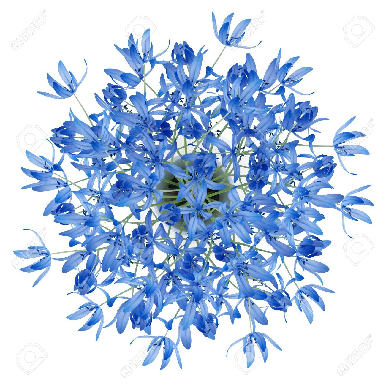 Top View Of Blue Flowers In Vase Isolated On White Background Stock