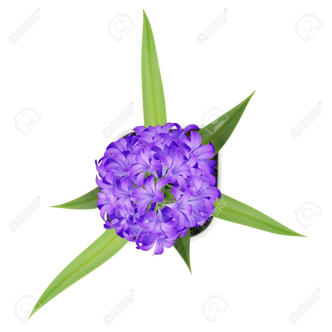 Top View Of Purple Flower In Pot Isolated On White Background Stock ...