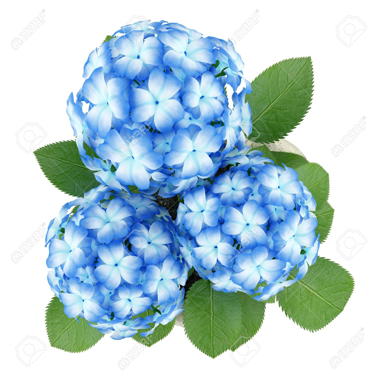 Top View Of Blue Flower In Stone Pot Isolated On White Background