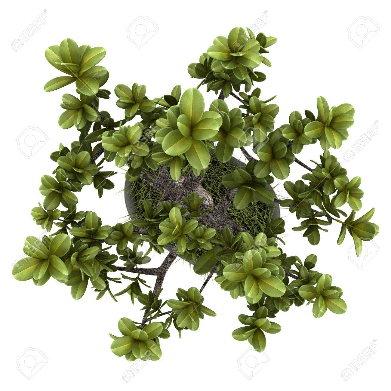 top view of bonsai plant in pot isolated on white background Stock Photo - 18076037