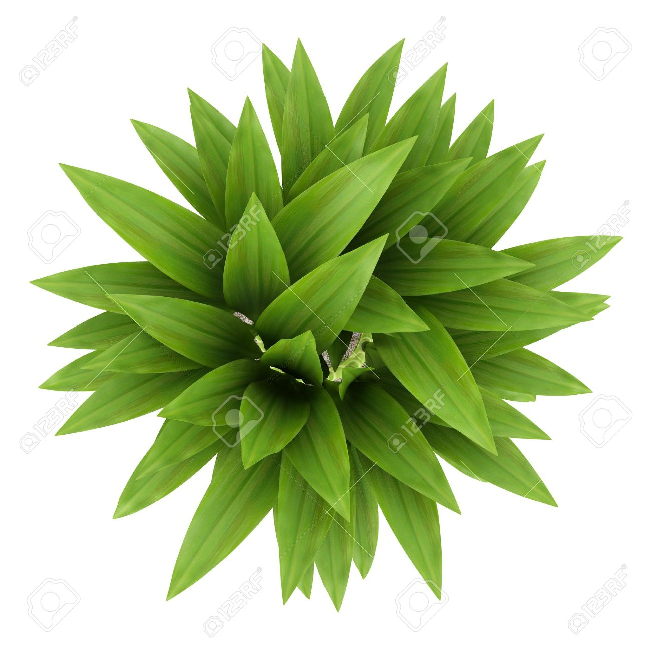 Top View Of Bamboo Plant In Pot Isolated On White Background Stock ... for Plant Top View Vector  181pct
