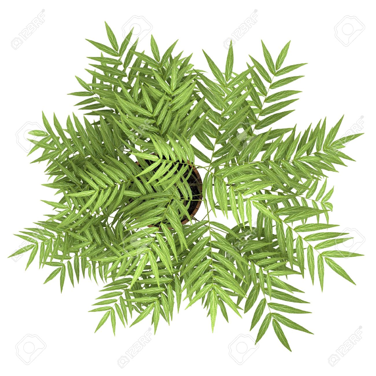 top view of decorative tree in pot isolated on white background Stock Photo - 19319277