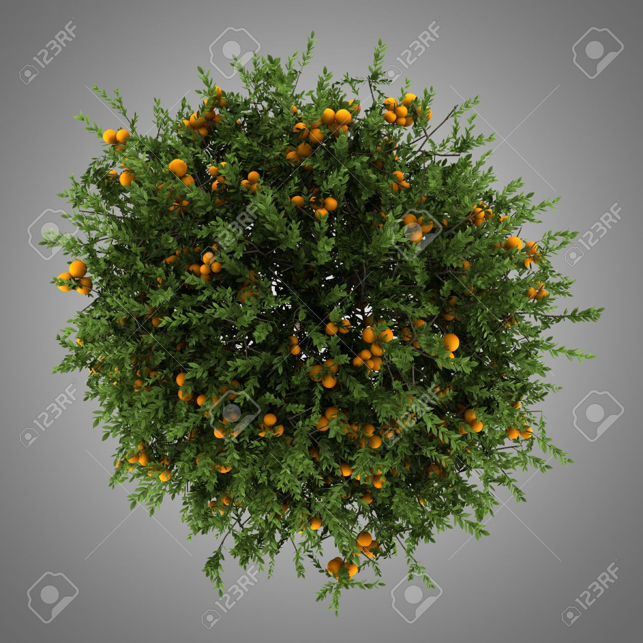 top view of orange tree isolated on gray background Stock Photo - 19719673