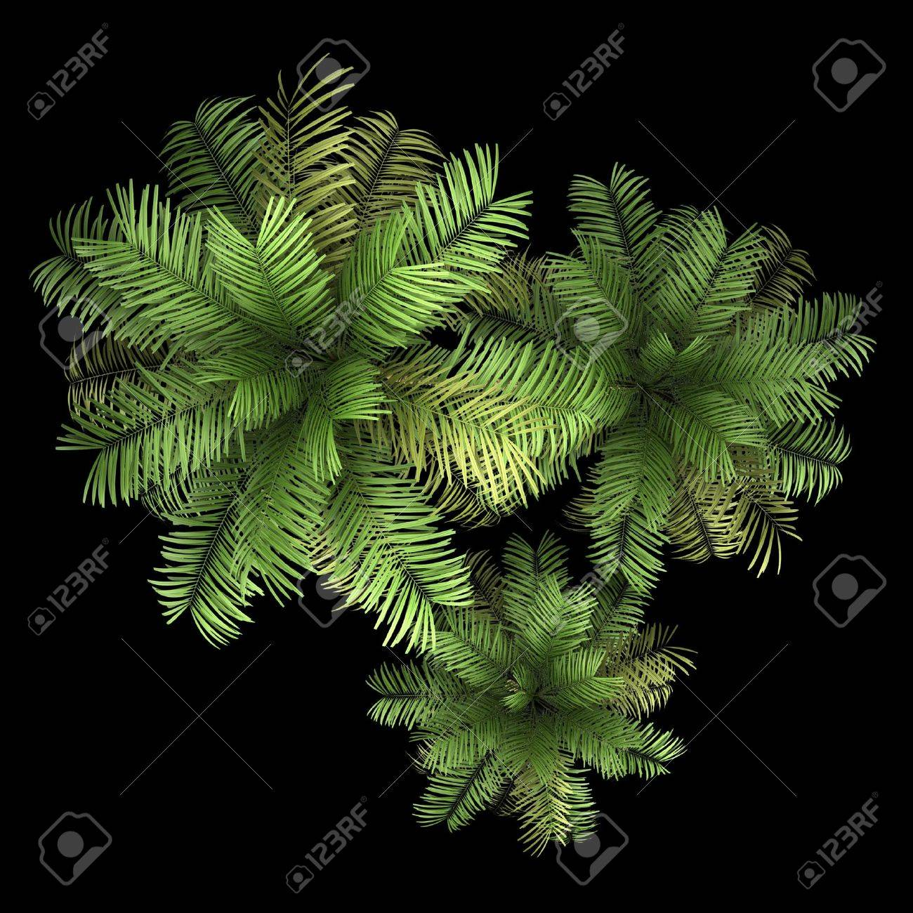 top view of three areca palm trees isolated on black background Stock Photo - 19910428