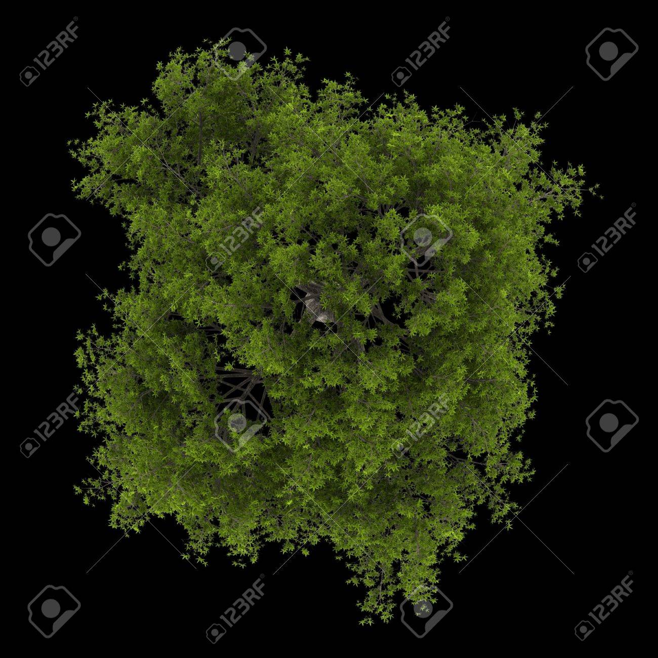 top view of crack willow tree isolated on black background Stock Photo - 20722839