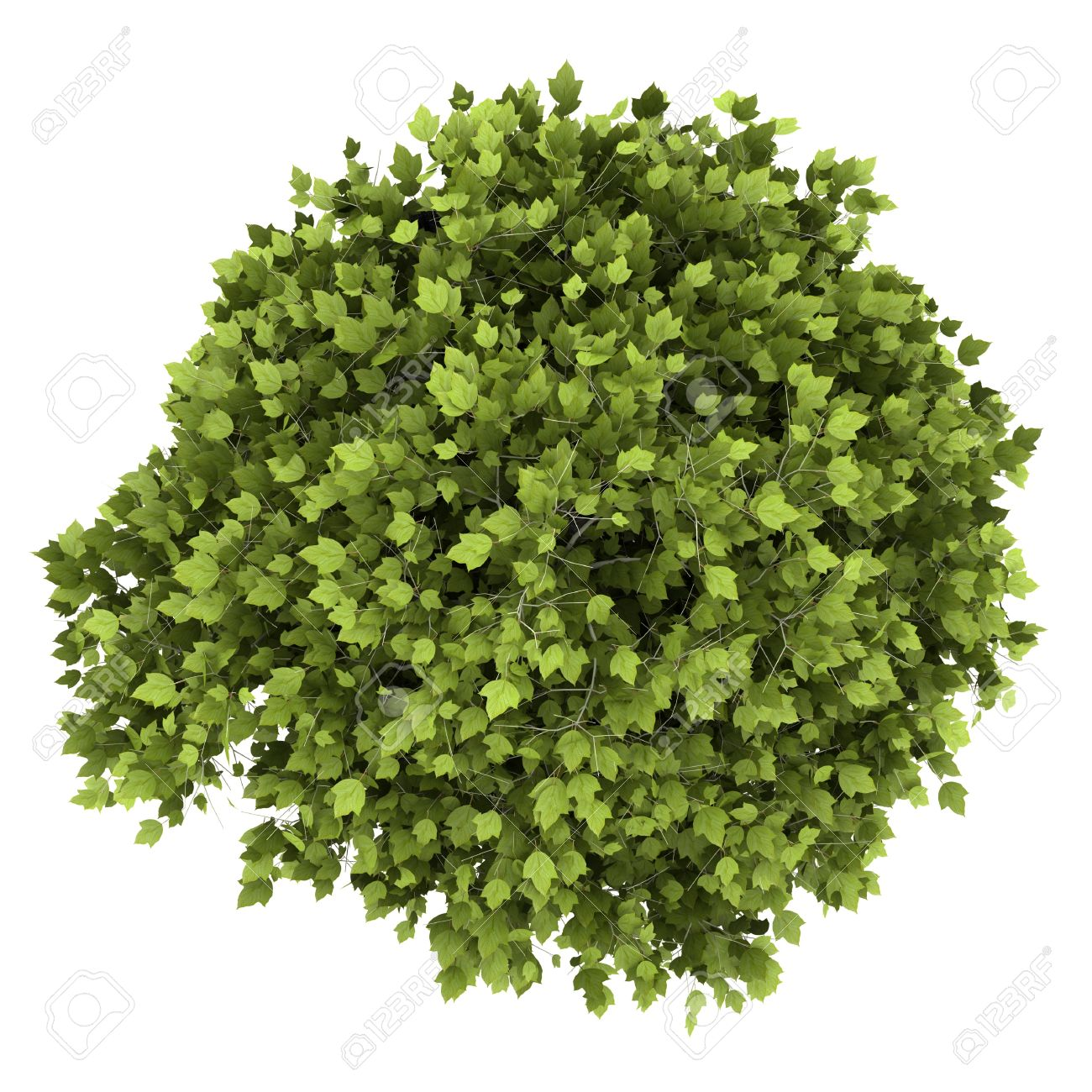 Top View Of Bonsai Plant In Pot Isolated On White Background Stock Photo