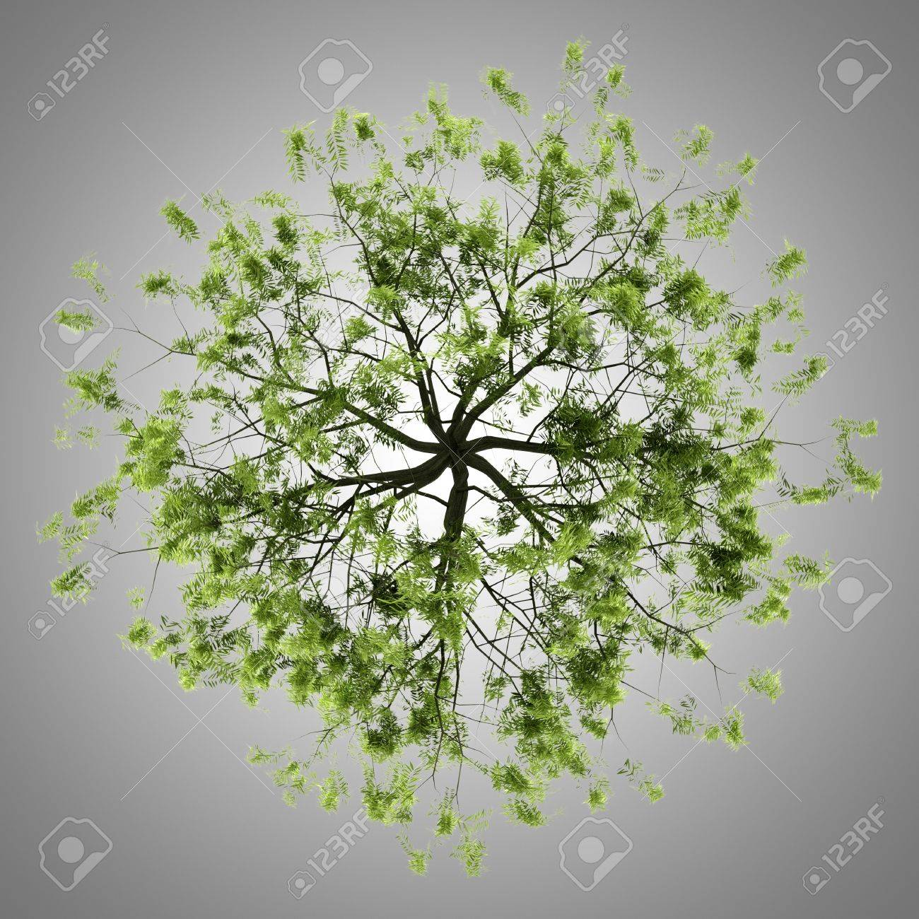 top view of willow tree isolated on gray background Stock Photo - 21222818