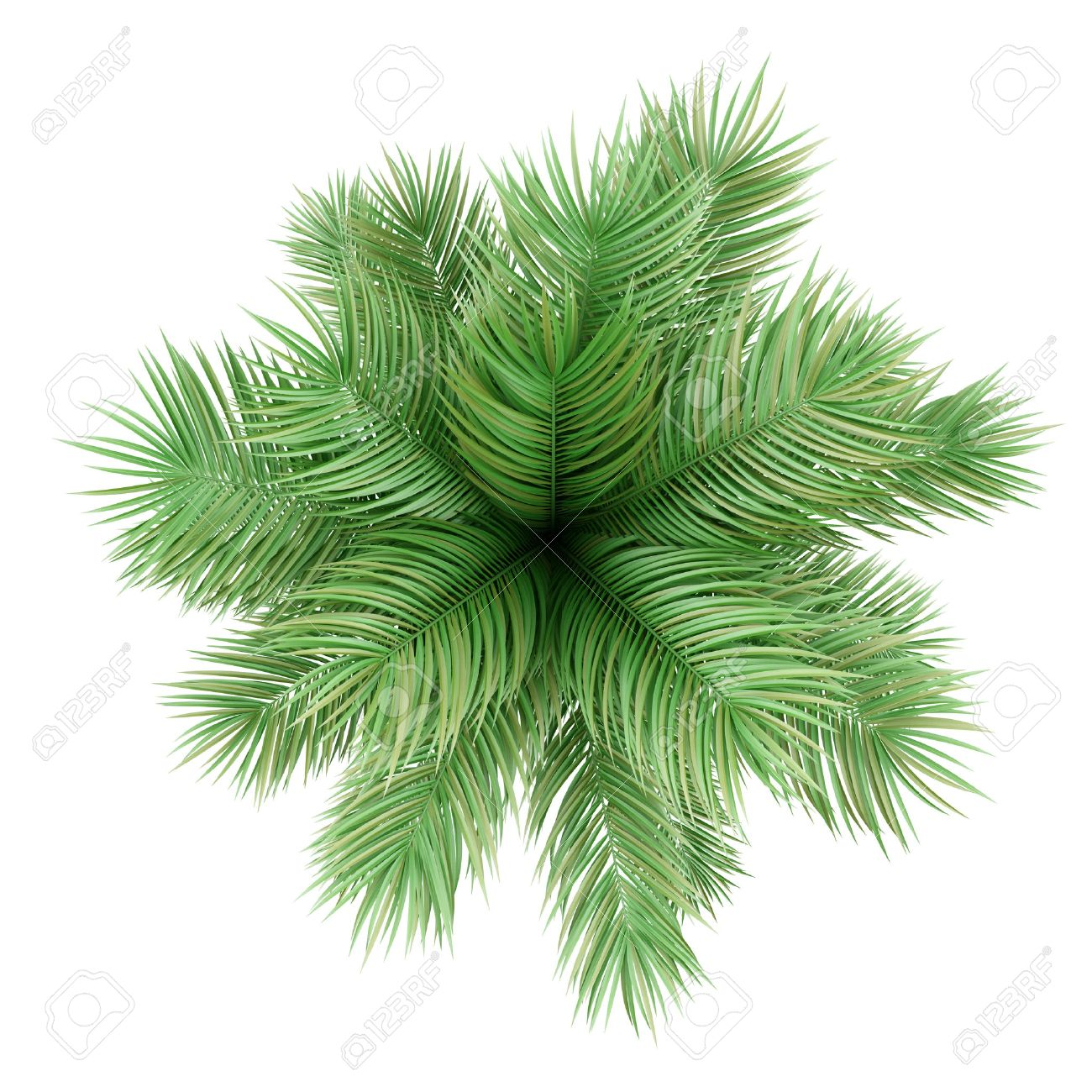 Top View Of Potted Palm Tree Isolated On White Background Stock ... for Palm Tree Top View Png  156eri