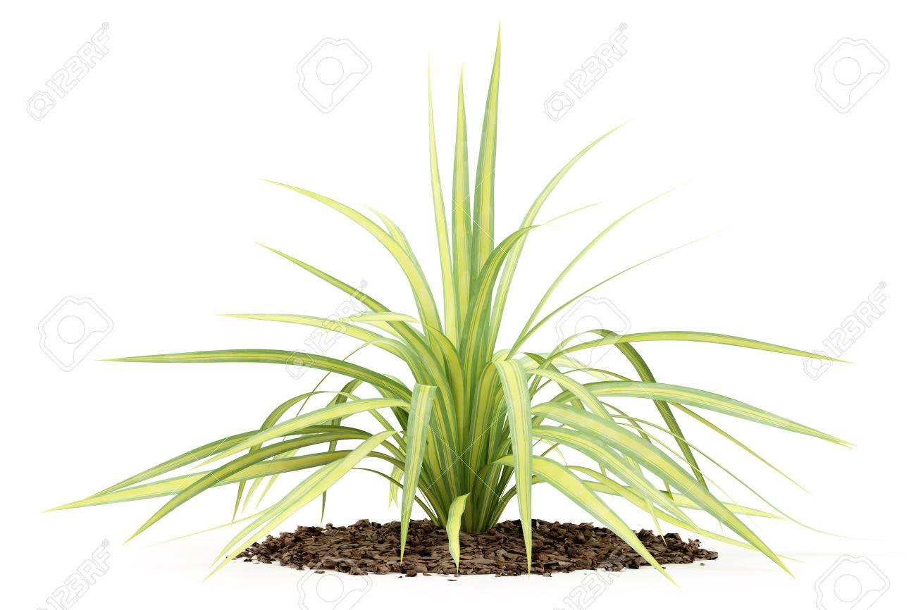 Gele Yucca Plant Geãsoleerd Op Een Witte Achtergrond 3d