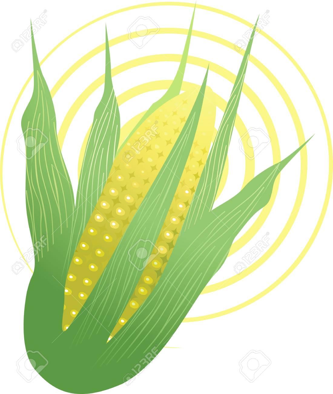 Illustration of Indian corn Stock Illustration - 3919426