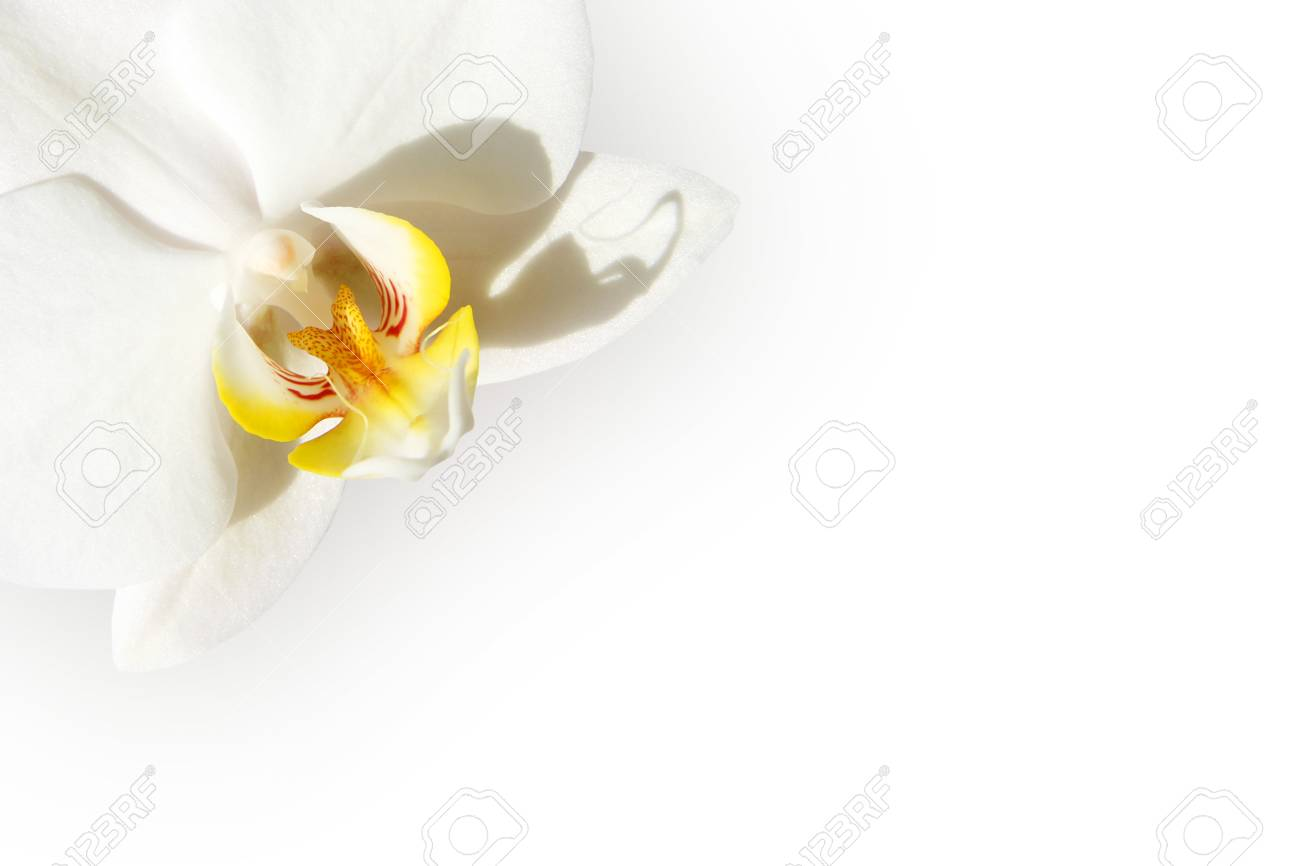 White orchid isolated on a white background Stock Photo - 1412344