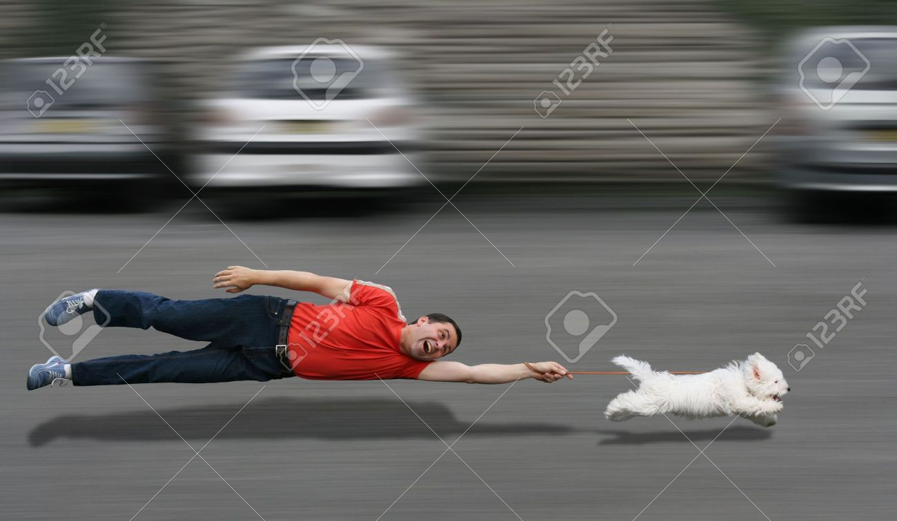 Disobedient dog running and dragging a man by the leash Stock Photo - 13318796