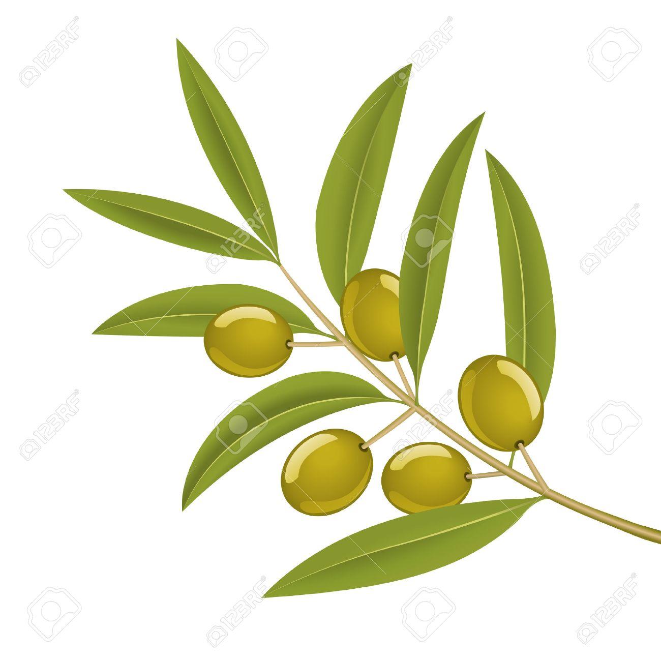 Green olives on branch, detailed vector illustration - 3176257