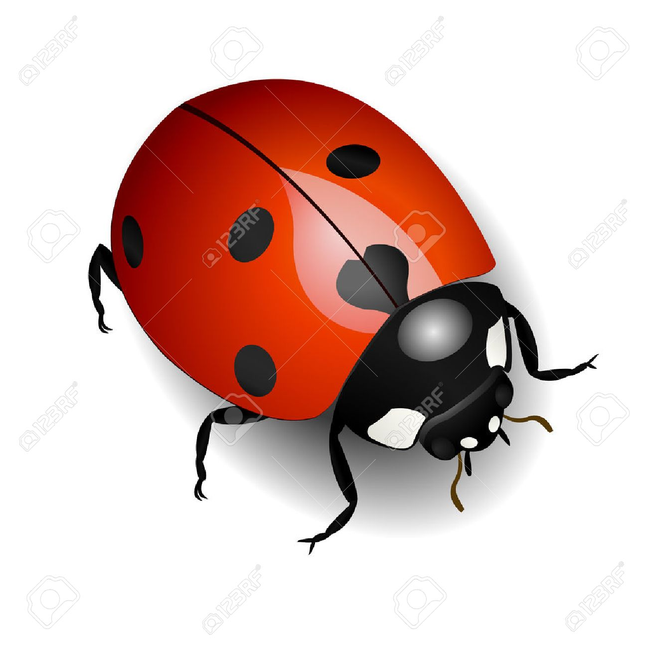 Vector illustration of a ladybug over white - 4255578