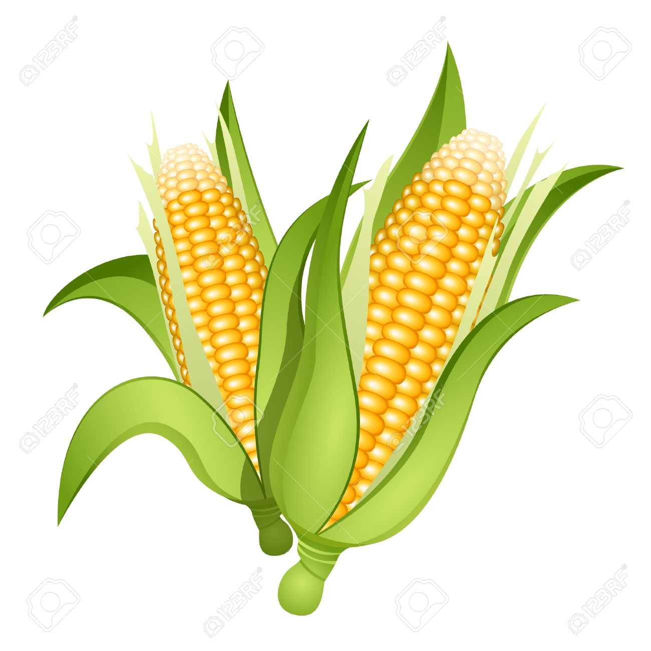 3 865 corn cob stock vector illustration and royalty free corn cob rh 123rf com corn on the cob clip art black and white corn on the cob clip art free