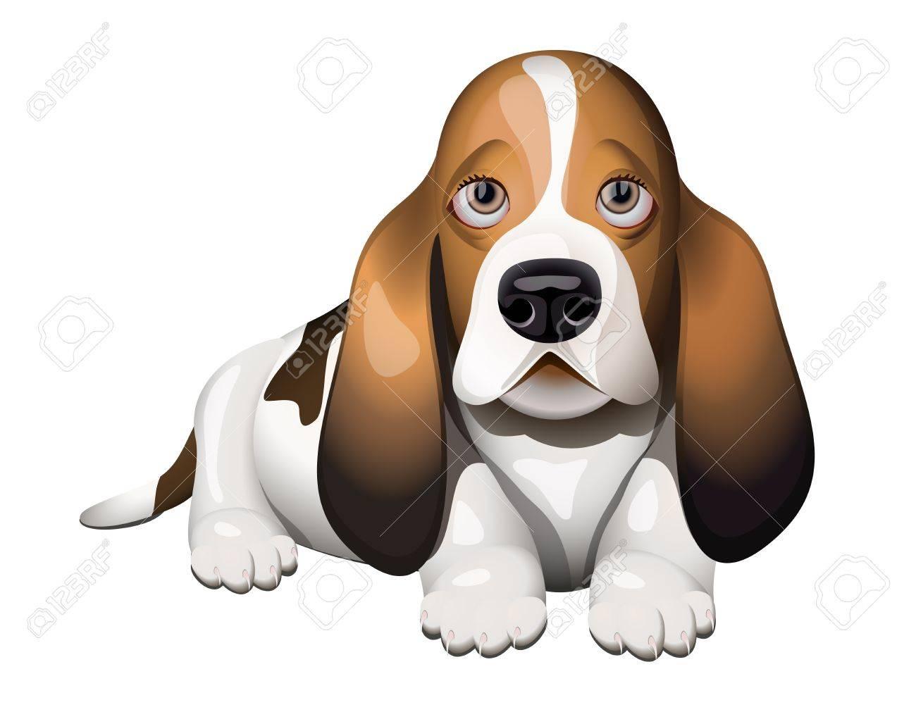 Basset Hound puppy lying on floor Stock Vector - 13283291