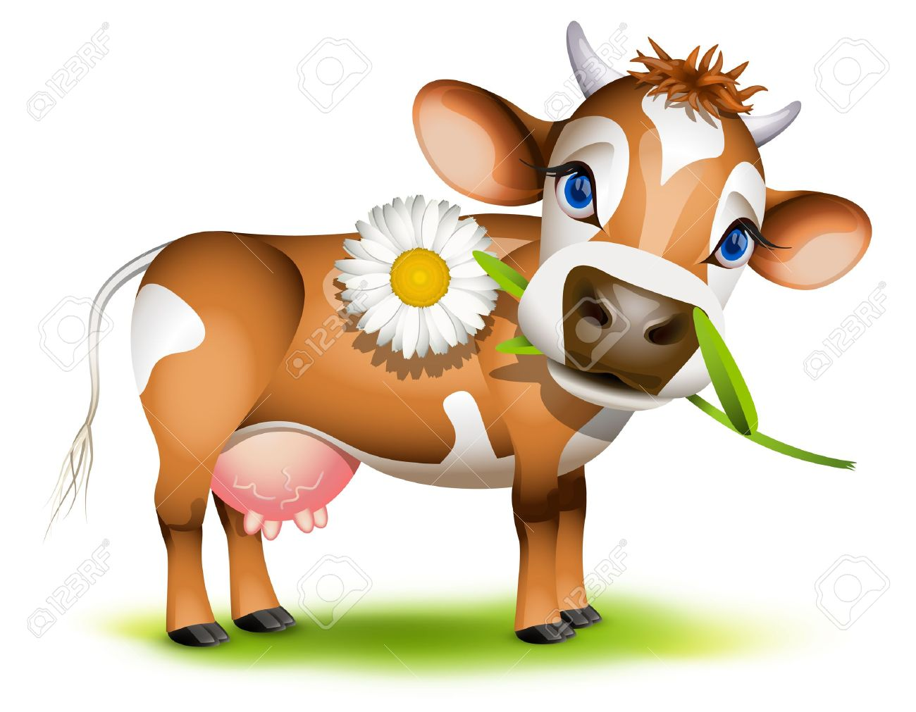 Little Jersey cow eating daisy Stock Vector - 15440065
