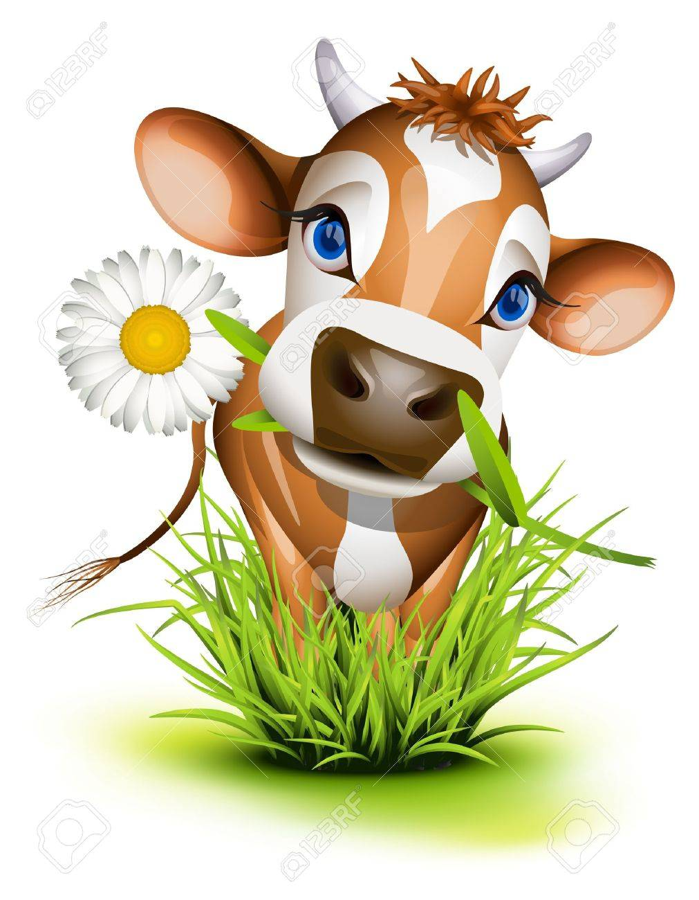 Jersey cow in green grass Stock Vector - 15440064