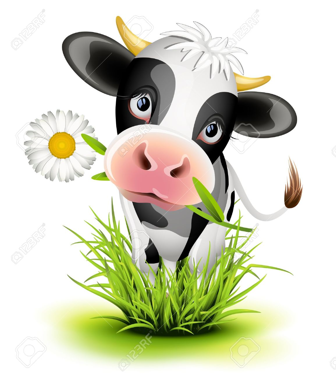 Cute Holstein cow in green grass Stock Vector - 15789427