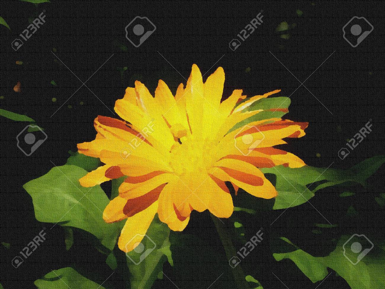 Illustration Of Calendula Flower With Orange Center And Petals
