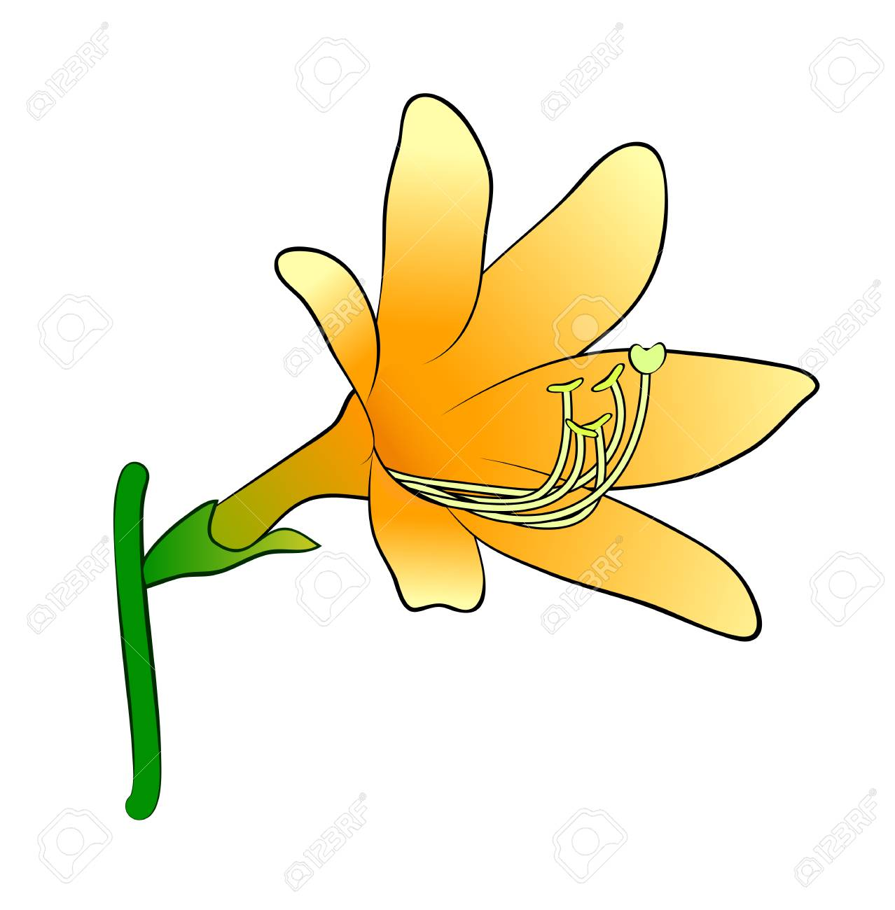 Vector illustration cartoon beautiful orange lily flower on vector vector illustration cartoon beautiful orange lily flower on green stem isolated on white background izmirmasajfo