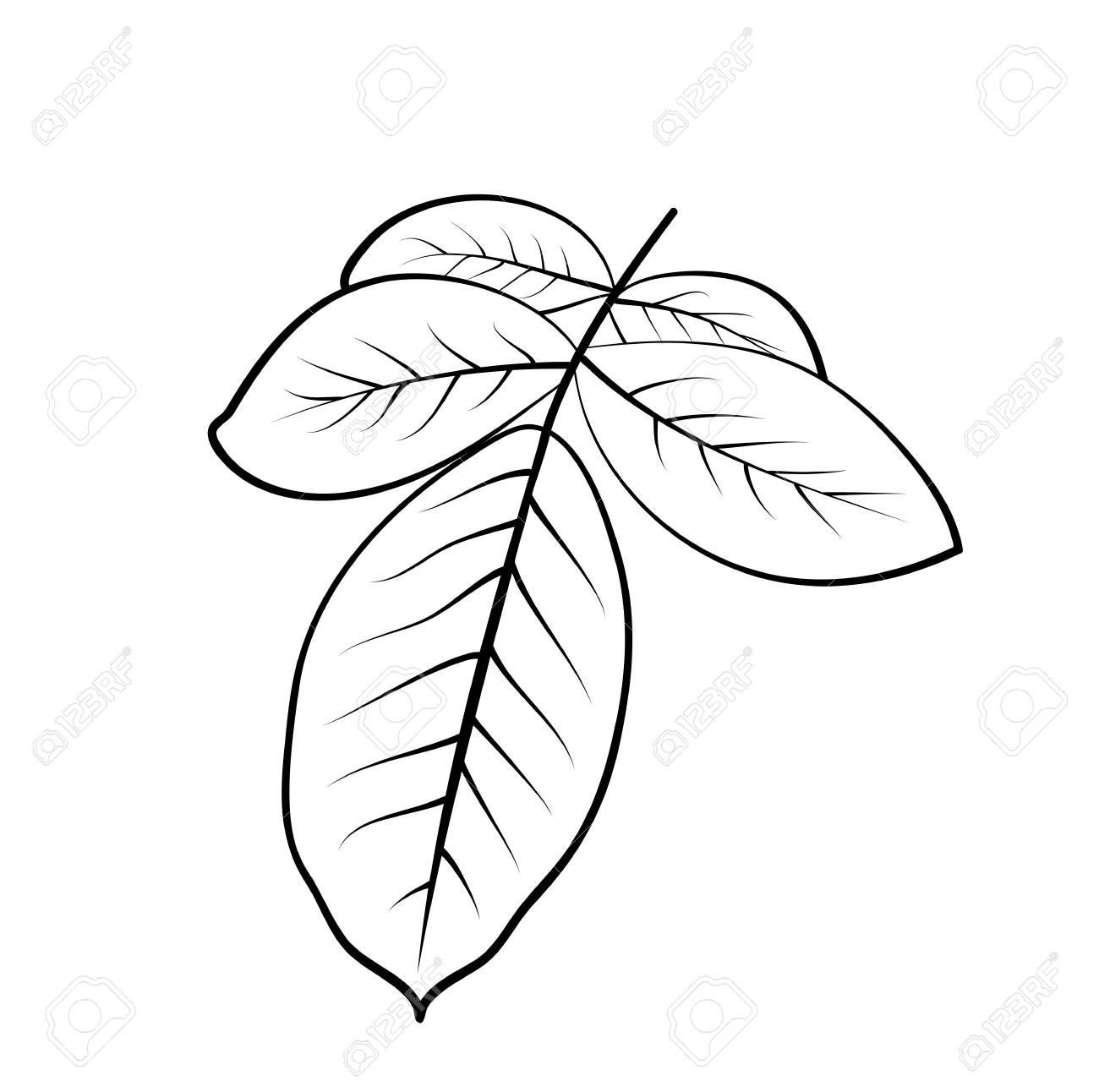 Vector Illustration Isolated Rose Leaves In Black And White Royalty Free Cliparts Vectors And Stock Illustration Image 101509670