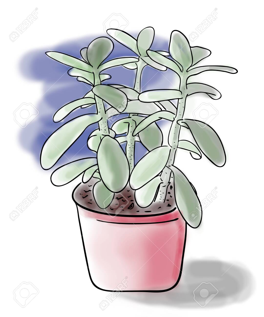 Digital Illustration Color Sketch Of Green Crassula Plant In Stock Photo Picture And Royalty Free Image Image 127052641