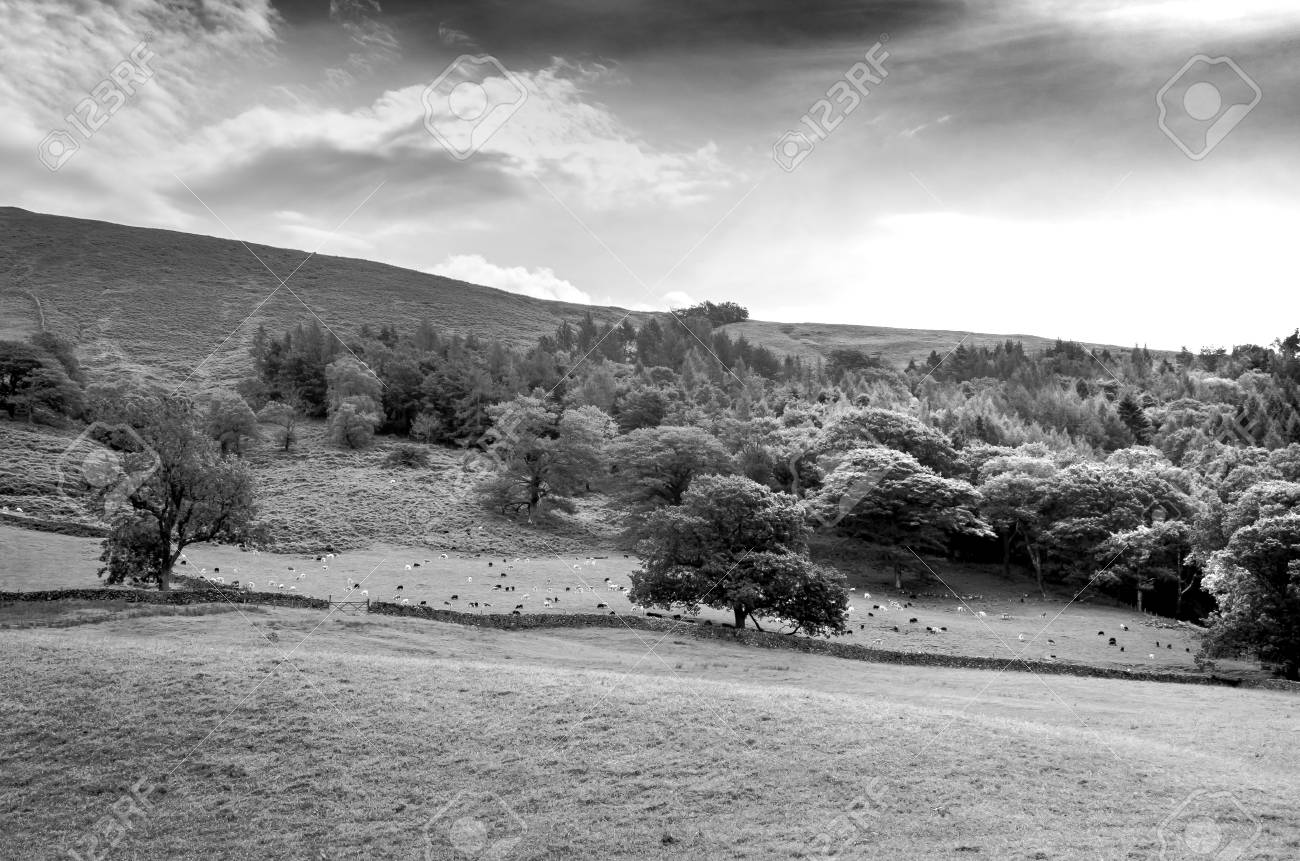 A countryside landscape in black and white in the english lake district cumbria stock photo