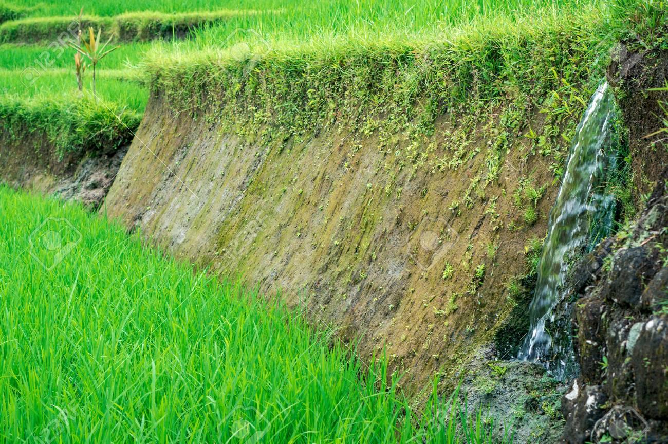 El Agua Que Fluye A Través Del Suelo De La Terraza De Arroz Bali Indonesia