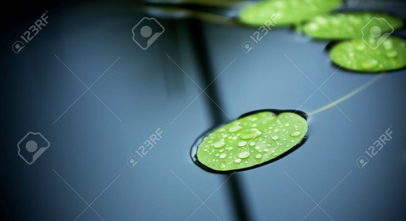 Bright green lilly pad's cover the surface of a pond Stock Photo - 8902988