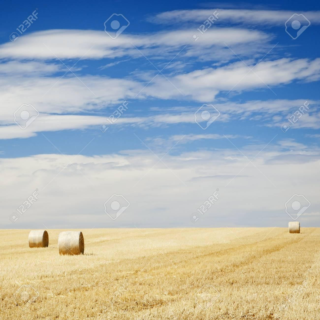 Bales of hay in the fields in summer time harvest Stock Photo - 17327970