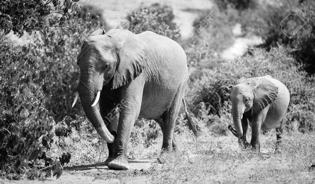 To acquire White and black baby elephant photography picture trends